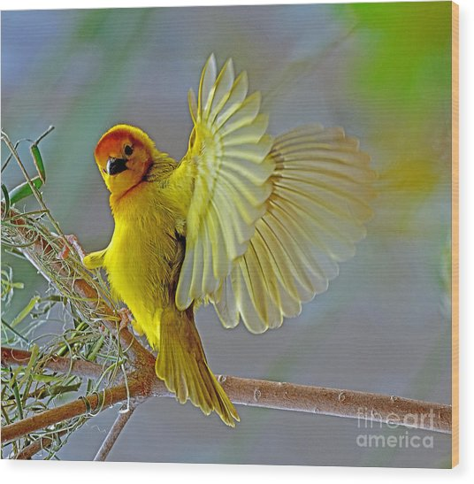 Golden Angel Wood Print