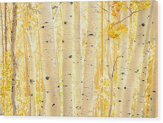 Golden Aspens Utah Wood Print
