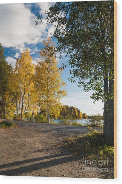 Golden Autumn Birches Wood Print