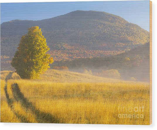 Golden Autumn Morning Wood Print