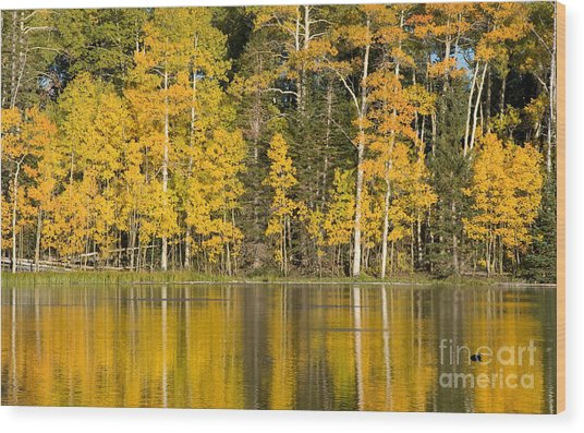 Golden Autumn Pond Wood Print