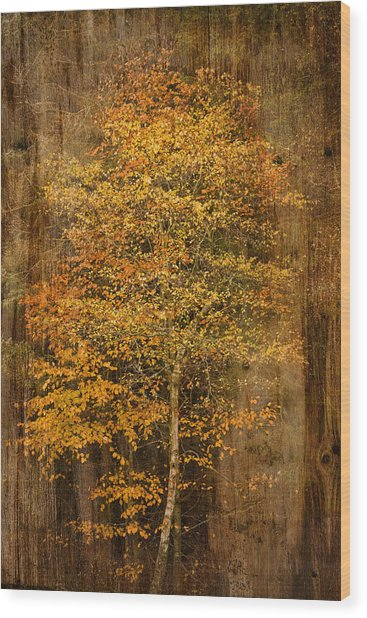 Golden Birch Wood Print