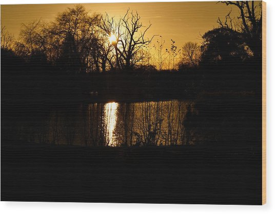 Golden Brown Wood Print by Dave Woodbridge