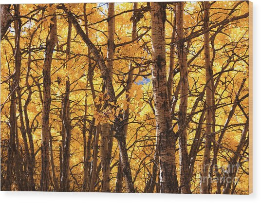 Golden Canopy Wood Print