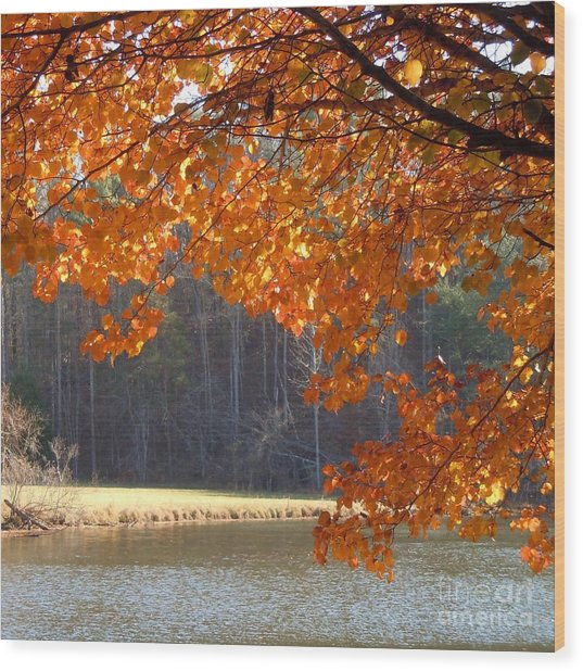 Golden Canopy Wood Print by Pauline Ross