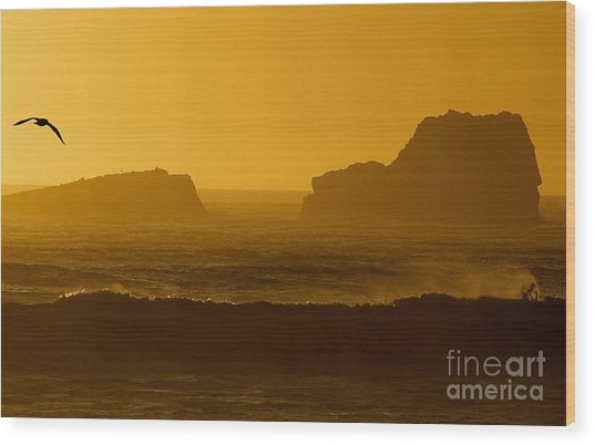 Golden Coast Wood Print