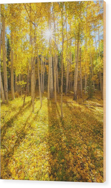 Golden Wood Print
