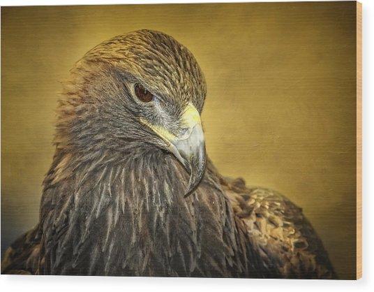 Golden Eagle Portrait Wood Print