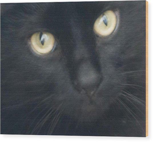 Golden Eyes Wood Print by Rhonda Humphreys