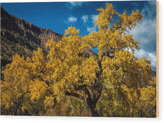 Golden Glory Wood Print