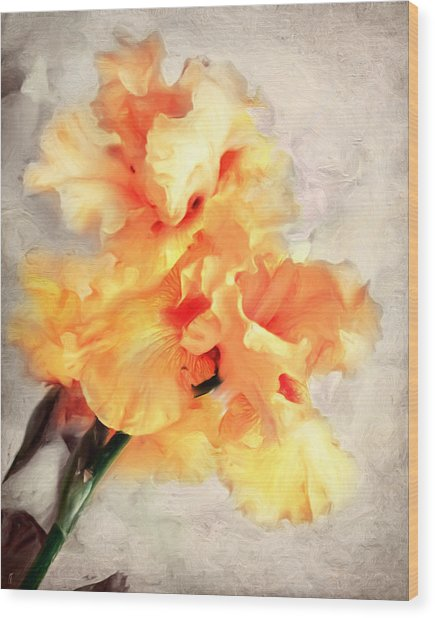 Golden Iris 1 Wood Print