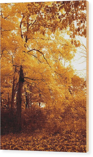 Golden Leaves 2 Wood Print by Jocelyne Choquette
