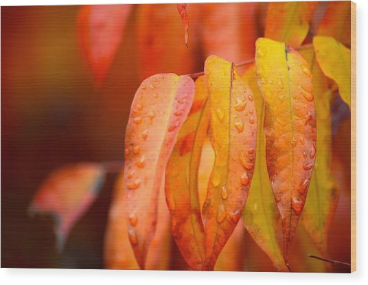 Golden Leaves In The Rain At Stanford Wood Print