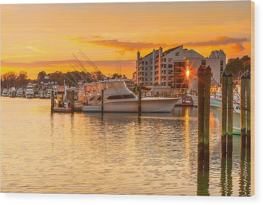 Golden Marina Wood Print
