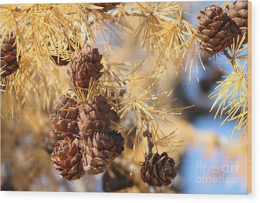 Wood Print featuring the photograph Golden Needles by Ann E Robson