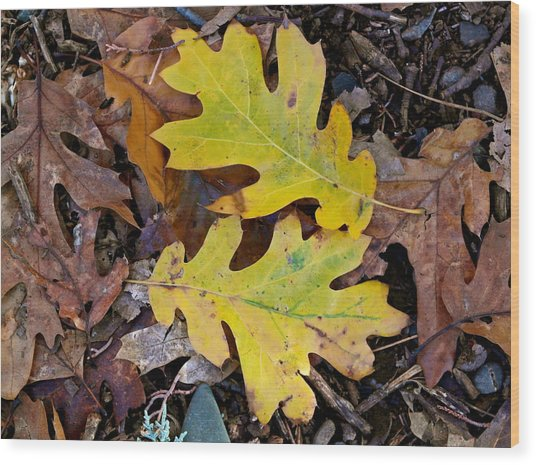 Golden Oak Leaf Duet Wood Print