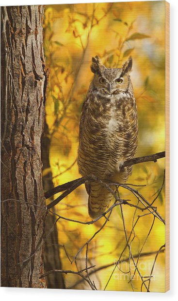 Golden Owl Wood Print