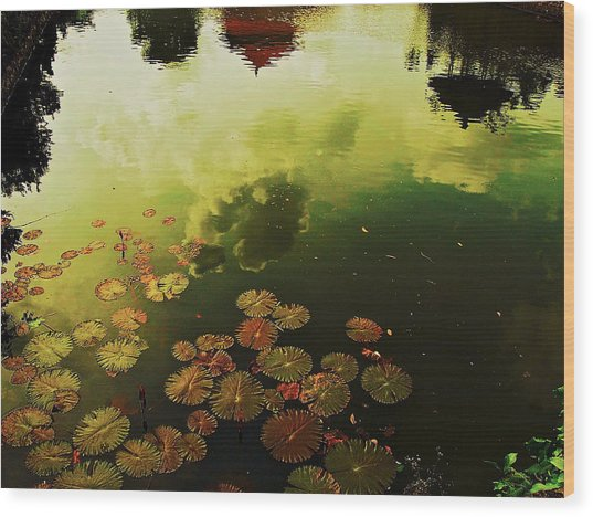 Golden Pond Wood Print