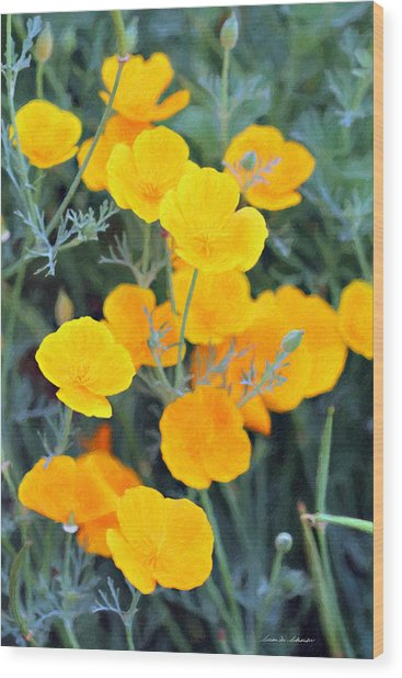 Golden Poppies Wood Print