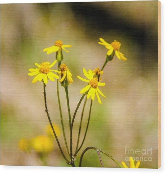 Golden Ragwort Wood Print