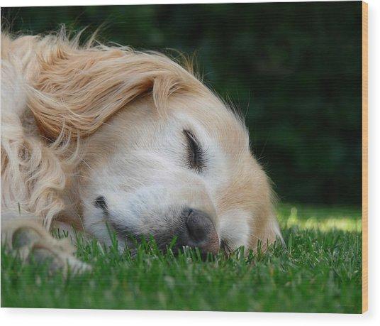 Golden Retriever Dog Sweet Dreams Wood Print