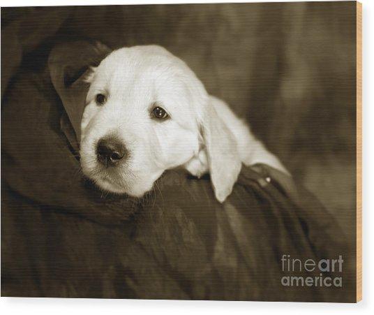 Golden Retriever Pup Wood Print
