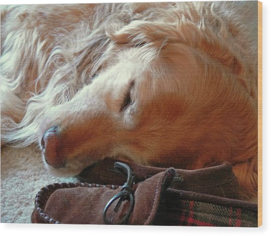 Golden Retriever Sleeping With Dad's Slippers Wood Print
