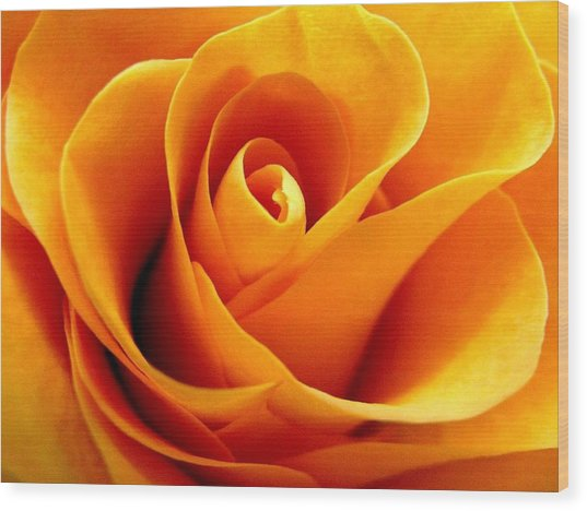 Golden Rose Wood Print