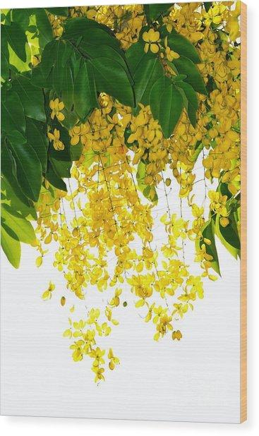 Golden Showers Flowers Wood Print