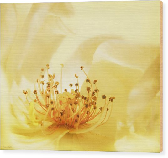 Golden Showers Rose Wood Print