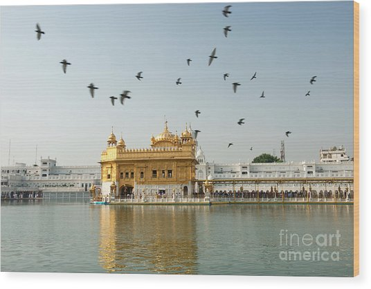 Golden Temple In Amritsar Wood Print