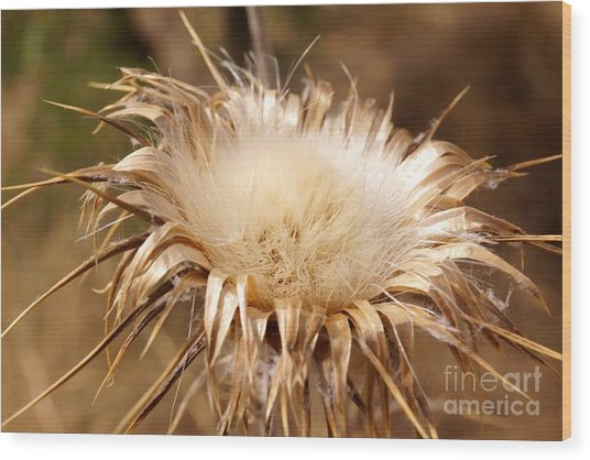Golden Thistle Wood Print