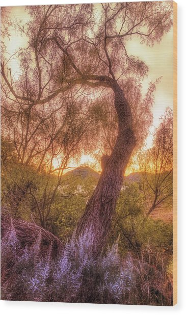 Golden Tree At The Quartz Mountains - Oklahoma Wood Print