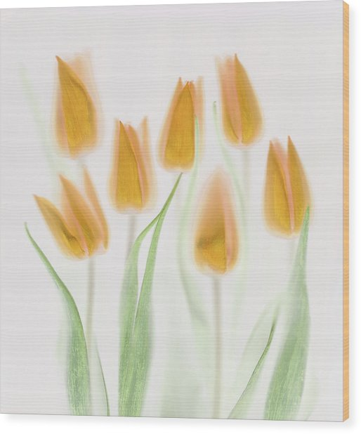 Golden Tulips Wood Print by Brian Haslam