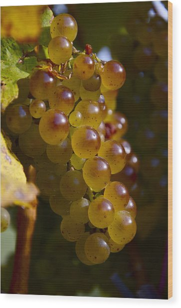 Golden Wine Grapes Wood Print