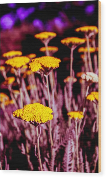 Golden Yarrow On A Blood Moon Night Wood Print