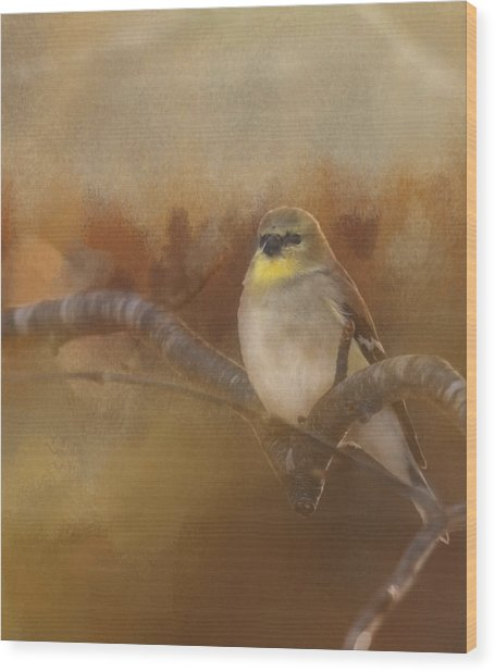 Resting Goldfinch Wood Print