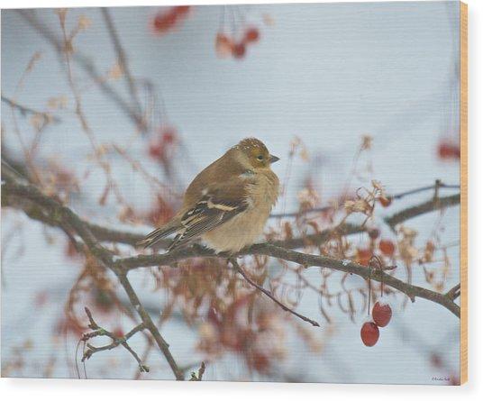 Goldfinch Brrrr Wood Print