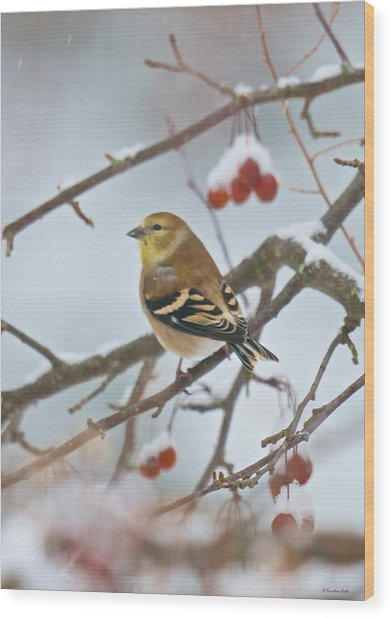 Goldfinch In Snow Wood Print