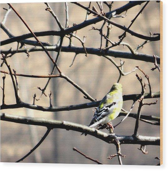 Goldfinch On Budding Branch Wood Print