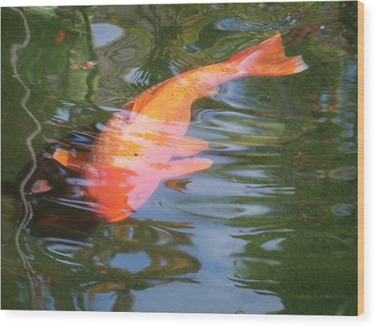 Goldfish Wood Print