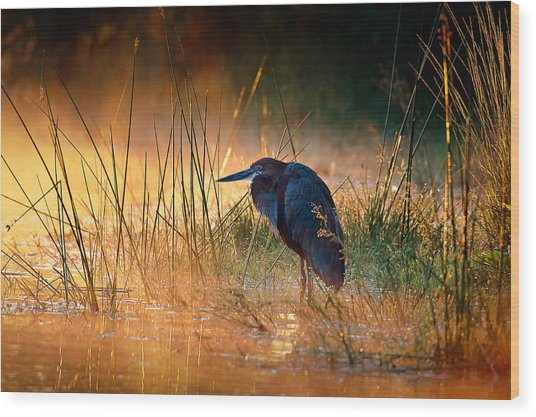 Goliath Heron With Sunrise Over Misty River Wood Print