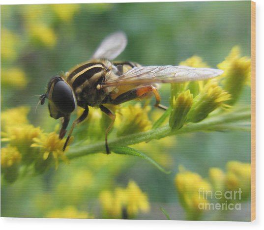 Good Guy Hoverfly  Wood Print