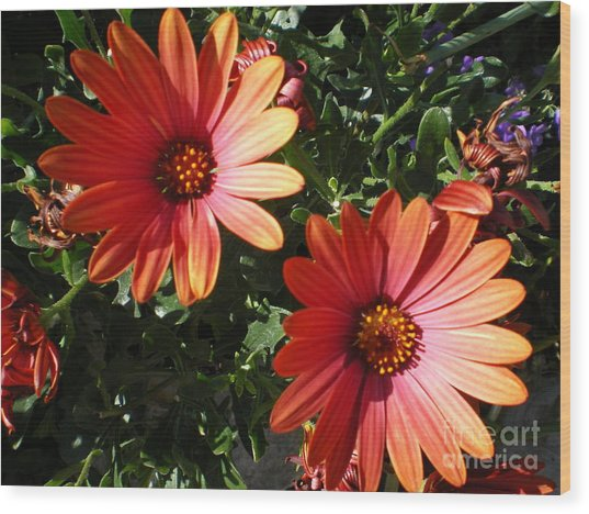 Good Morning Flower. Wood Print by Ann Fellows