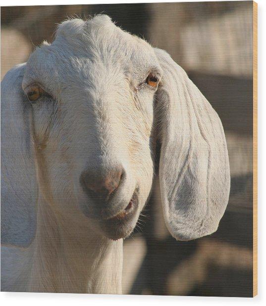 Goofy Goat Wood Print