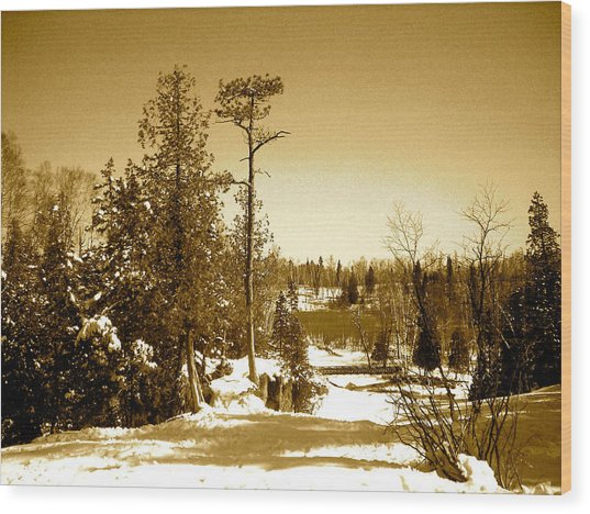 Goosberry Tree Wood Print by Eric Larson