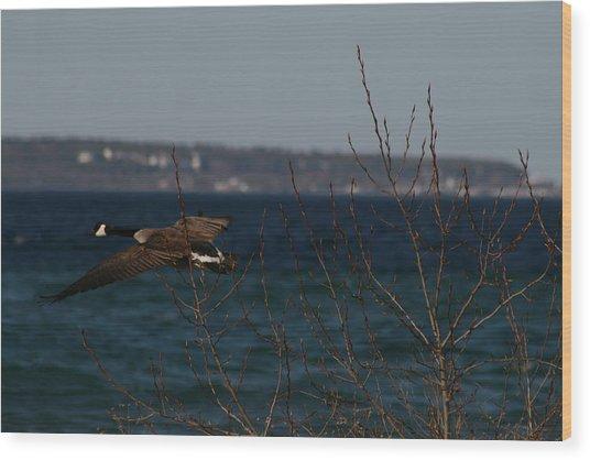 Goose Wood Print by Brady D Hebert