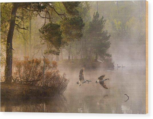 Goose Fight Wood Print