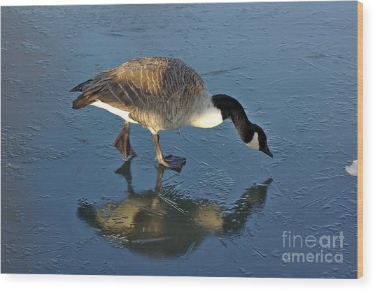 Goose On Ice Wood Print