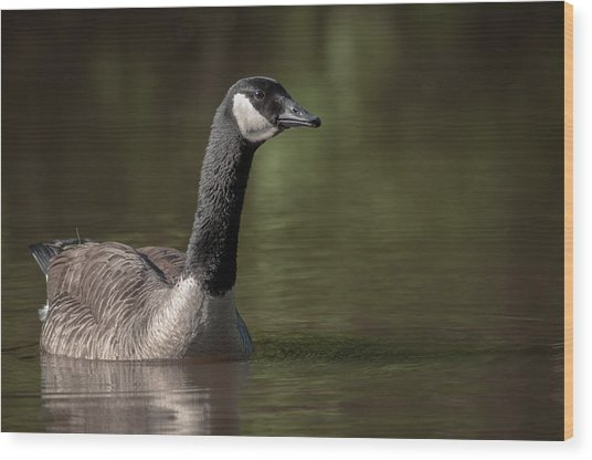 Goose On Pond Wood Print